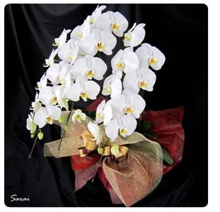 開店祝い胡蝶蘭おすすめ商品