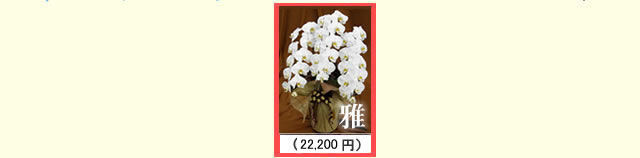 胡蝶蘭価格帯