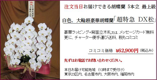 今日届く胡蝶蘭5本立ち最上級商品