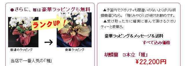 豪華ラッピング+メッセージカード+送料 全て込み価格 胡蝶蘭 3本立ち 雅 21,800円