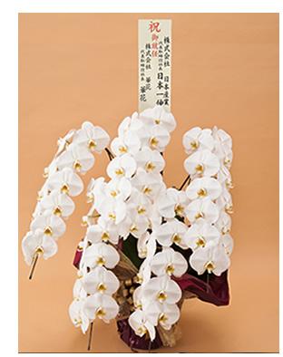 胡蝶蘭に大きい立て札を立てたイメージ