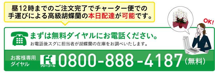 胡蝶蘭問い合わせ電話 0800-888-4187