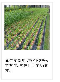 プライドを持った蘭農家が作っています。