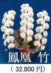 胡蝶蘭3本立ち「鳳凰 竹」32,800円