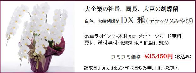 お祝いに胡蝶蘭ギフトDX雅