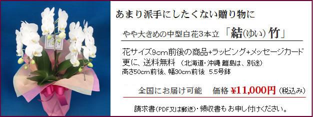 1万円胡蝶蘭