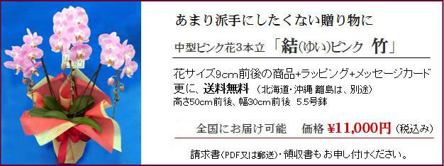 1万円胡蝶蘭ピンク