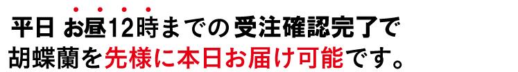 胡蝶蘭 今日届く